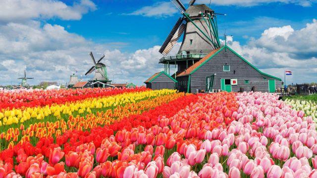 Mùa xuân châu Âu rực rỡ sắc hoa