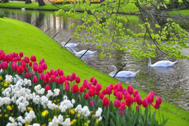 Lễ hội hoa Tulip ở Ý