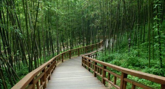 Vườn trúc Juknokwon